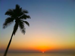 Sunlight, ocean and palm_ColP9.JPG